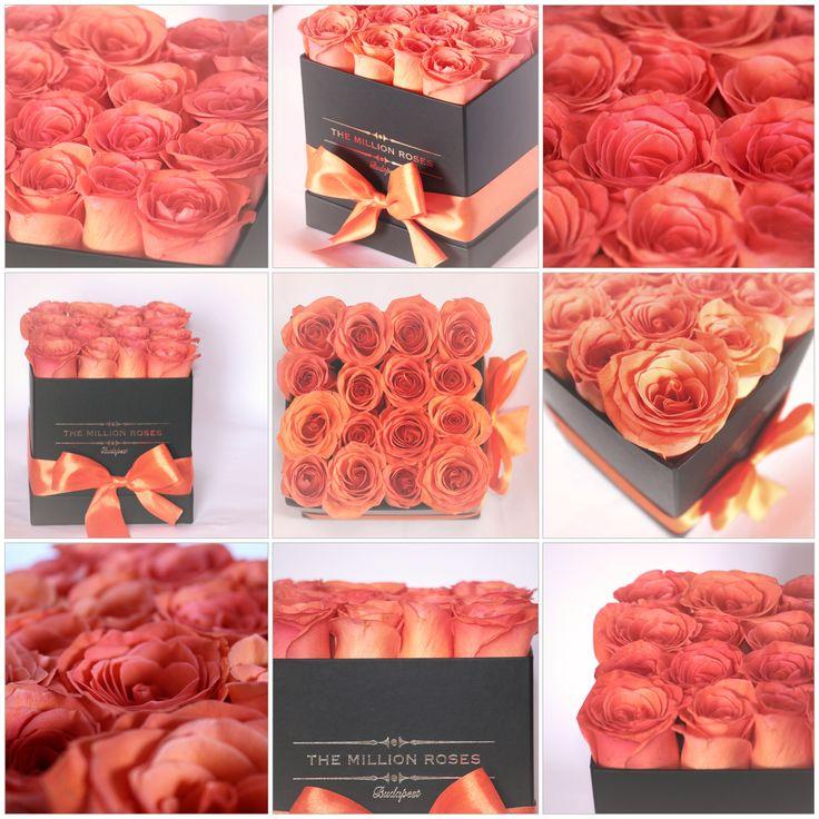 #themillionroses #roses #flowers