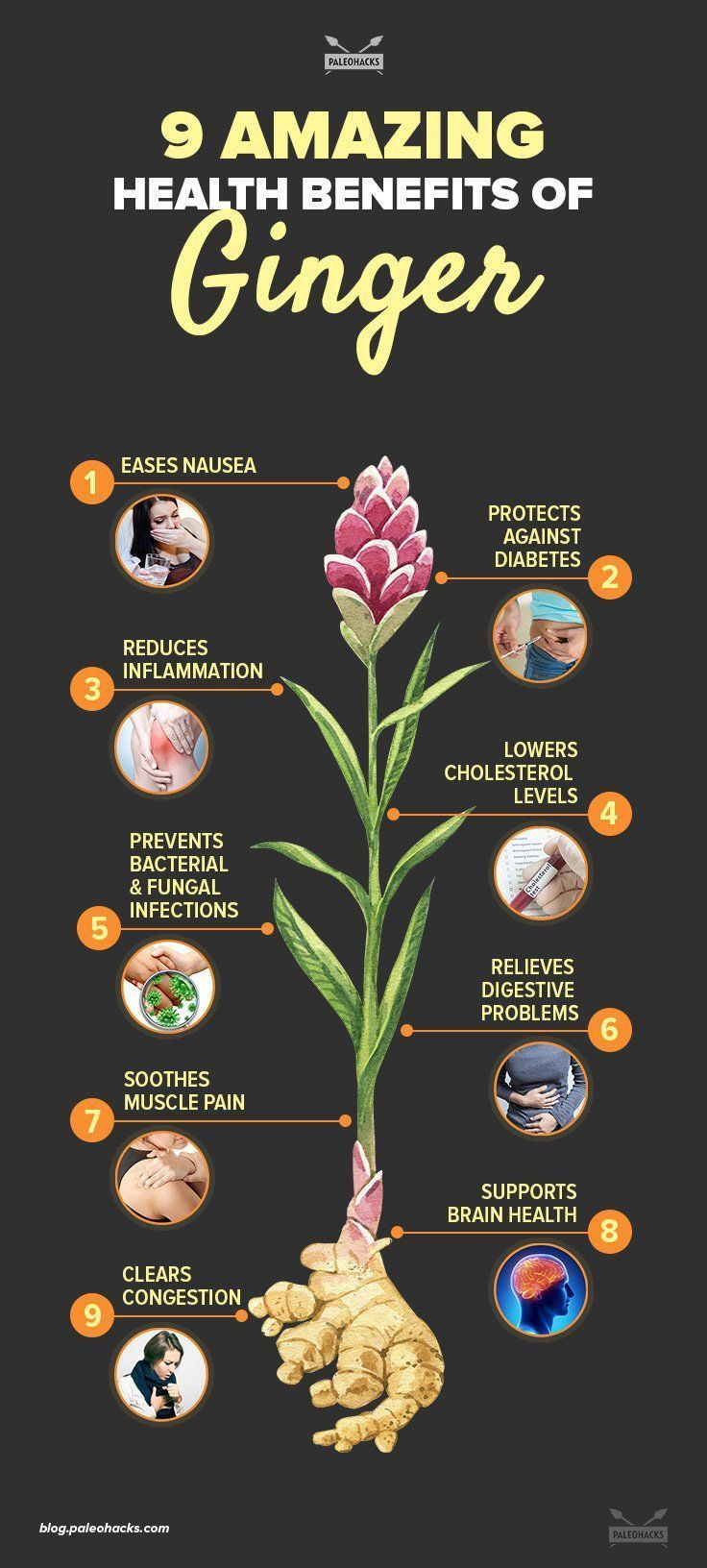 When it comes to superfoods, ginger ranks high on the list thanks to its powerful health benefits. For the full article visit us here: http://paleo.co/gingerbenefit