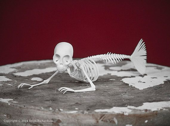 Fiji Mermaid Skeleton 3D Print Taxidermy by MythicArticulations