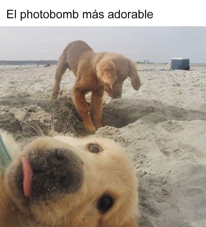 19 Divertidos Y Geniales Memes De Perros Que Te Haran Sonreir Por El Resto Del Dia Memes Perros Perros Memes Divertidos Sobre Perros