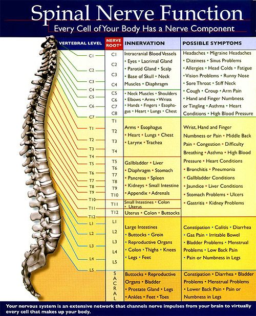 Your Nerve System controls and coordinates every function of your body. It is your nerve system that allows you to adapt to, and live in your environment. A large portion of your nervous system passes through your spine. It is your spinal cord that acts as the major cable exiting your brain, travels down inside your spinal column and branches ... Read More