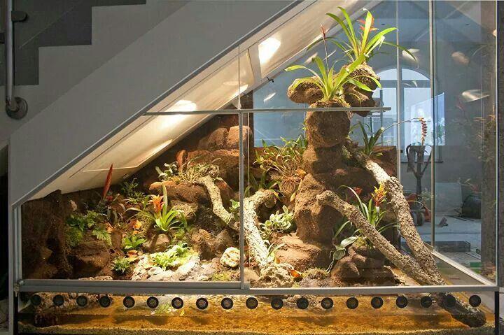 caiman terrarium