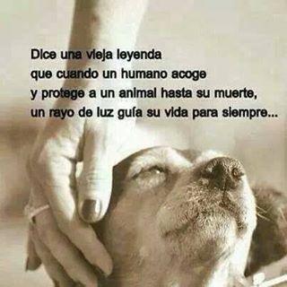 #Frase #Leyenda #Humano #Animal #Proteccion #Luz #Guia #Vida #RayodeLuz