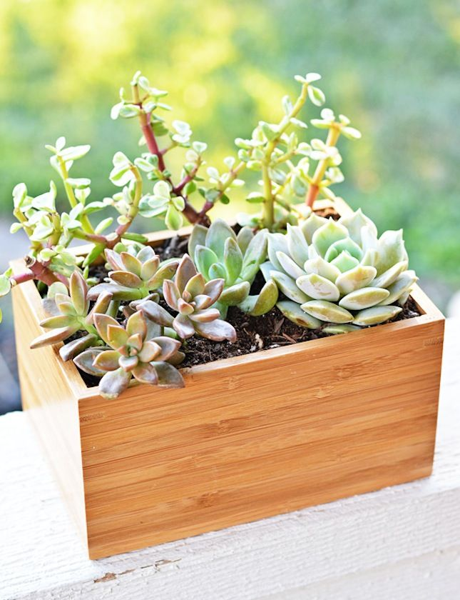 Don't you think succulents and bamboo just belong together? Originally this planter was a dish set, but now it's a standout accessory for your backyard.