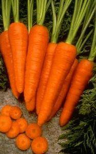 How to grow carrot seeds using fresh coffee grounds and radish seeds