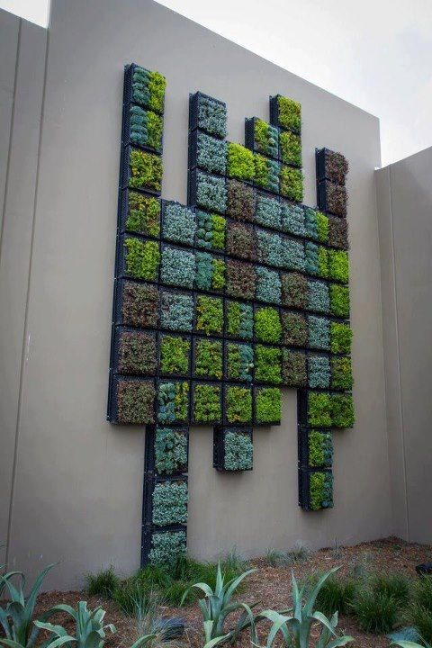 Best 25+ Succulent Wall Gardens Ideas On Pinterest | Succulent