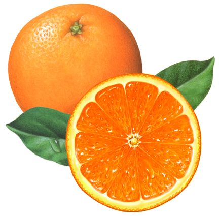 One whole orange and one cut half orange with two orange leaves.