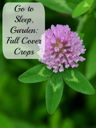 Gardening: Cover Crops for Fall and Winter. Winterize your garden, prevent erosion and improve your soil with these nitrogen rich cover crops.