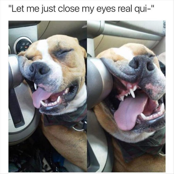 Funny Animal Picture Dump Of The Day 24 Pics: Best 25+ Weekend Humor Ideas On Pinterest