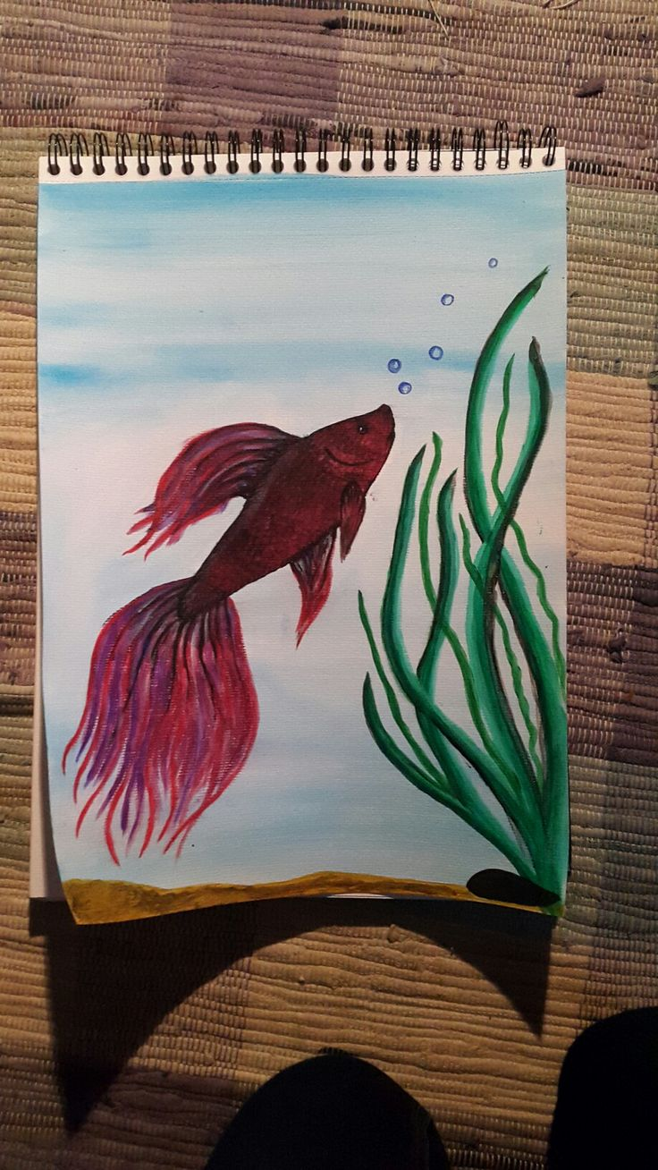 Beta fish, acryl