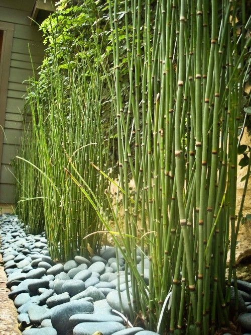bamboo ... love the way it is contained here, would make a great privacy wall IF I could keep it from taking over the yard