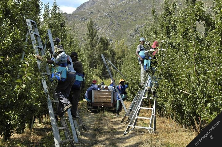 Fruit Farming in South Africa | : south africa western cape near ceres town agriculture fruit farming ...