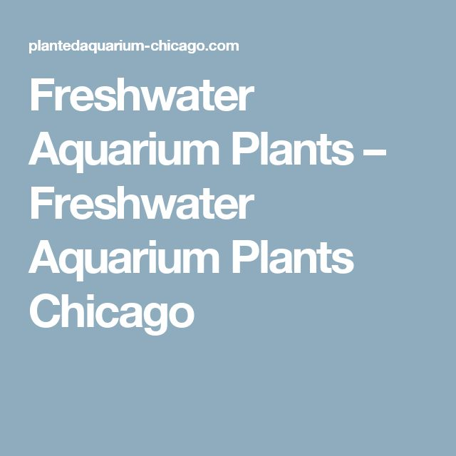 Freshwater Aquarium Plants – Freshwater Aquarium Plants Chicago