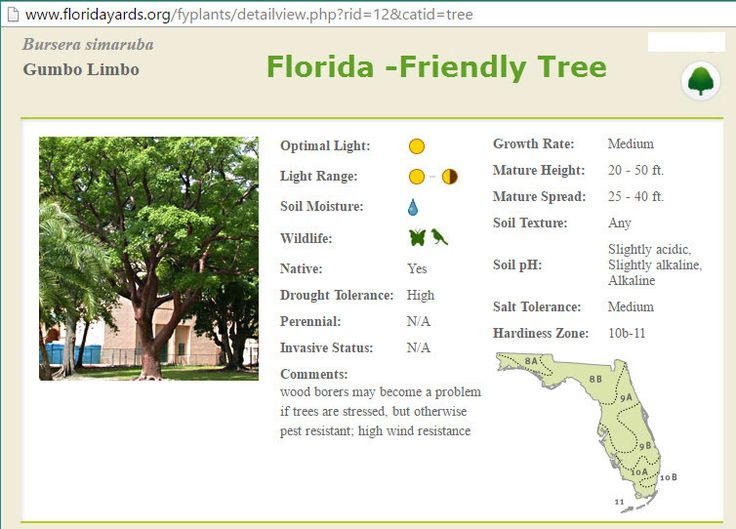 Find Florida plants for your landscape and Florida garden. Learn about Florida-friendly plants, including Florida native plants, that require little irrigation or fertilizer, are low maintenance and attract wildlife.