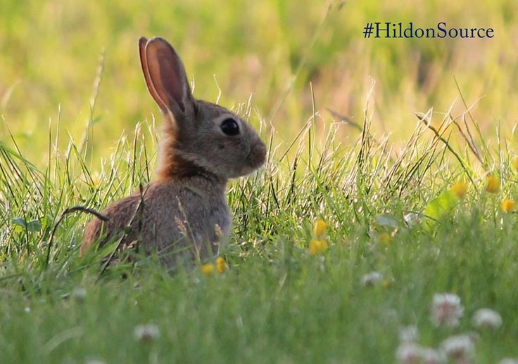 Spring is on it's way at the Hildon Estate. #HildonSource