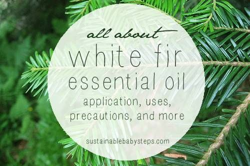 Learn how white fir essential oil can support healthy joints, muscles, respiratory issues, and more, via SustainableBabySteps.com