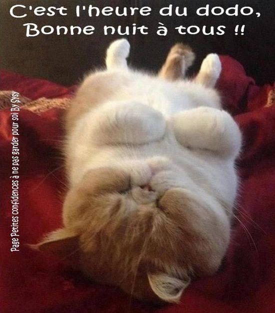 C'est l'heure du dodo, Bonne nuit à tous! #bonnenuit chat sommeil mignon