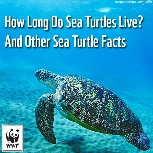 Sea turtle facts | Kids and family education etc ...