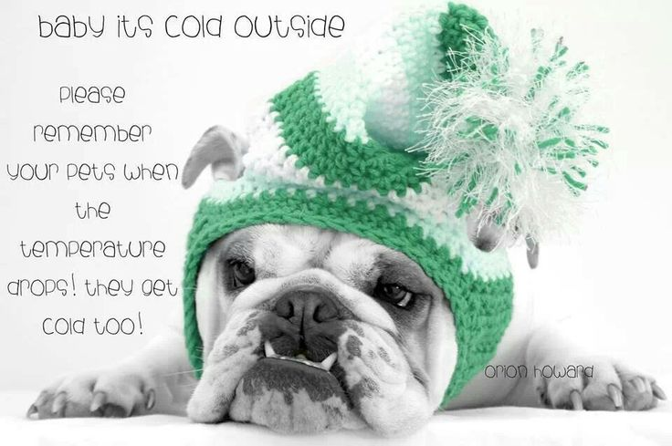 Ice Melt Safe For Dogs Home Depot