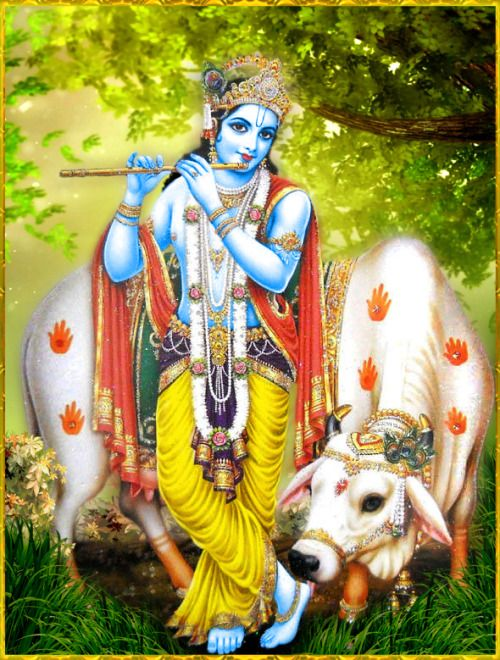 "✨ SHRI KRISHNA ✨ http://careforcows.org/ ""The Hare Krishna maha-mantra is non-different from Krishna Himself. When the sixteen words or the thirty-two syllables of the Hare Krishna mantra are loudly vibrated, the Supreme Lord Krishna Himself dances..."