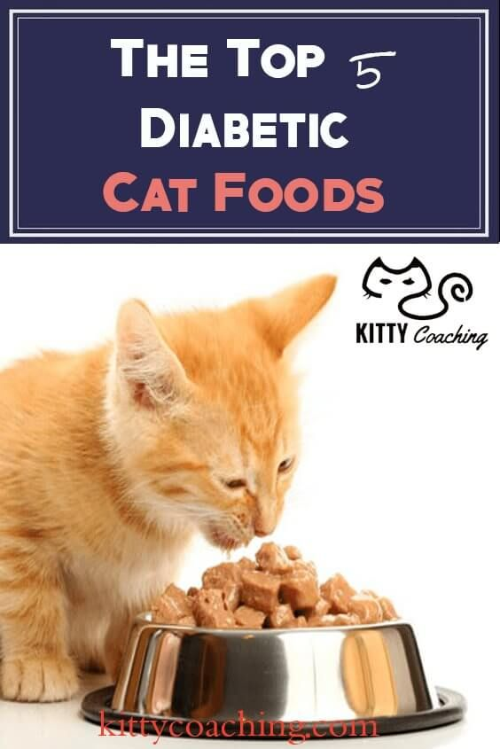 High Protein Foods For Diabetic Cats
