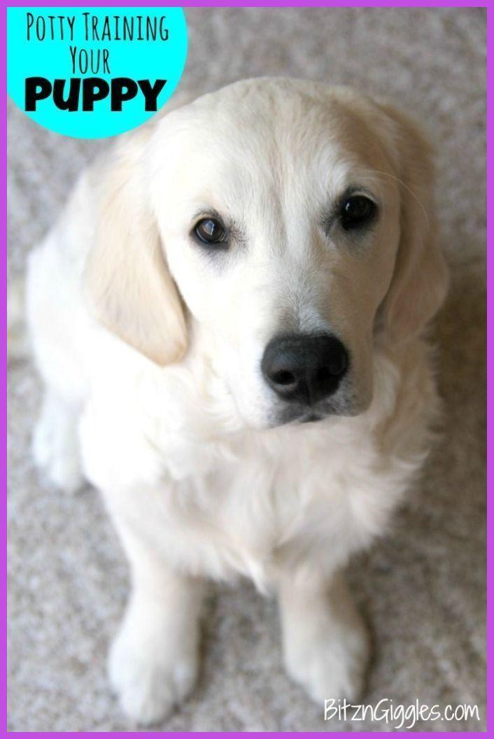 Dog Potty Training Obedience Tips Puppy Potty Training Tips