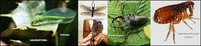"""Naturarchives. Biodiversity. Instituto Bidebieta.Crisopa, """"hormigas león"""", escarabajos y pulgas"""