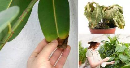 Aprende a identificar qué le pasa a tu planta y cómo solucionarlo https://goo.gl/FmKuid