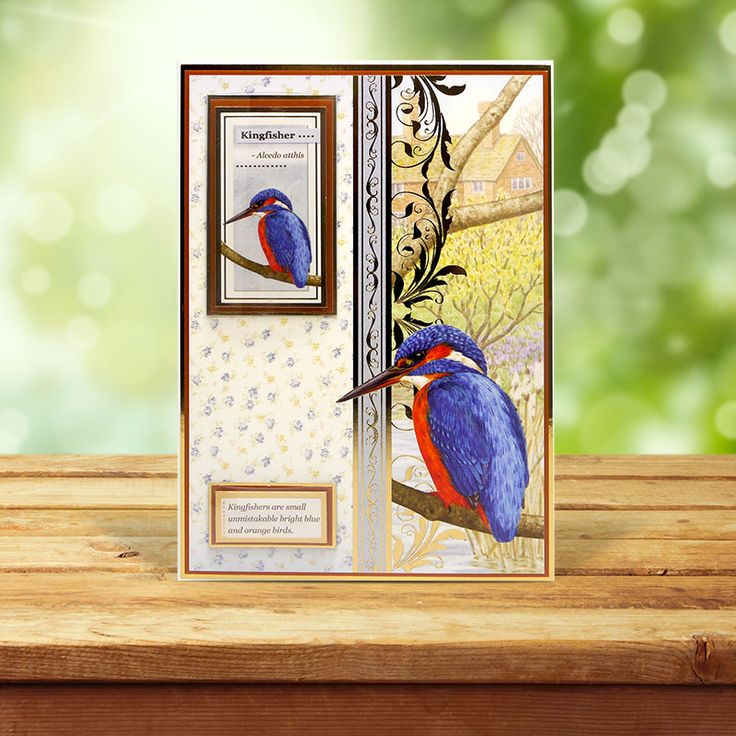 This card was made using the 'Robin & Kingfisher' topper set from the Birds of Britain Collection