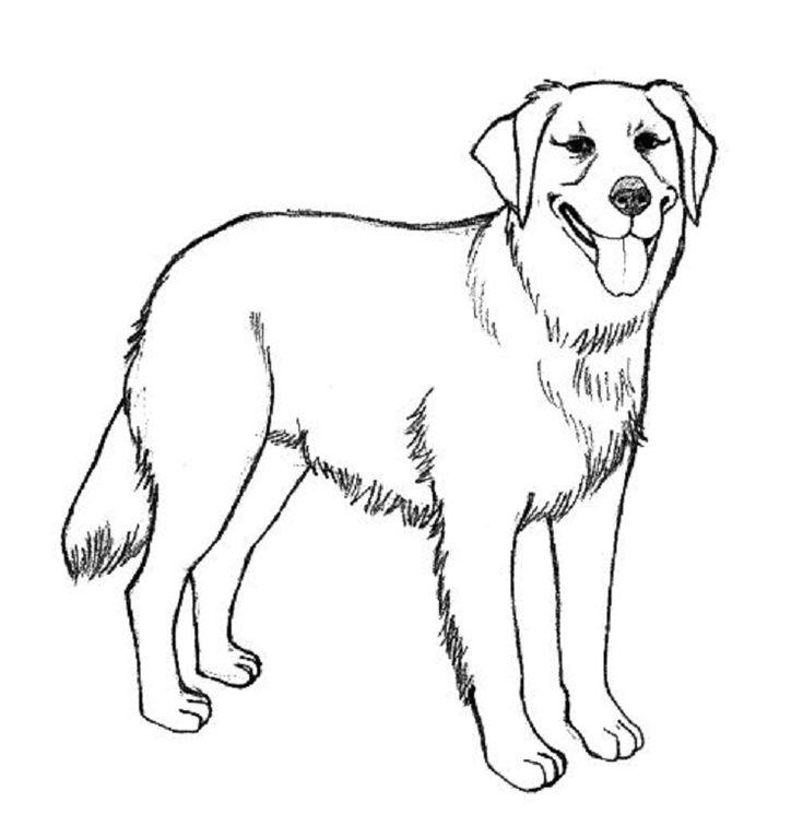 detailed dog coloring pages | hund malen, hund zeichnungen
