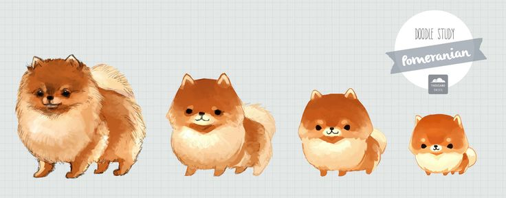 Doodle Study: Pomeranian by ~ethe on deviantART