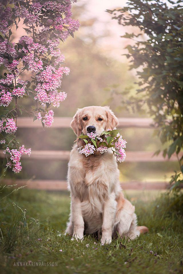 Flowers to you - Thank you for visiting me! ♥ facebook.com/fotografannakarinpalsson instagram.com/annakarinpalssonphotography