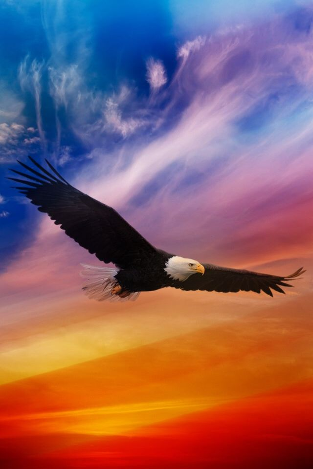 "Flying Eagle - Colorful sky~Animal Spirit Guide: The Eagle - ""In Nat. Am. Cultures the Eagle is Sacred as a Spiritual Messenger one that delivers peace, fertility, honor, freedom, strength, illumination, courage & the ability to rise above all. Bald Eagle Spirit Medicine is to teach spirit to see the HIGHEST TRUTH... In journey work, Bald Eagle may escort you to distant realms... Expert at Soul Retrieval."