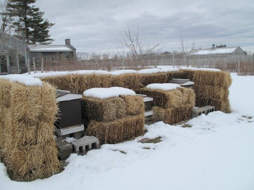 The beehives with their winter surround of protective hay bales