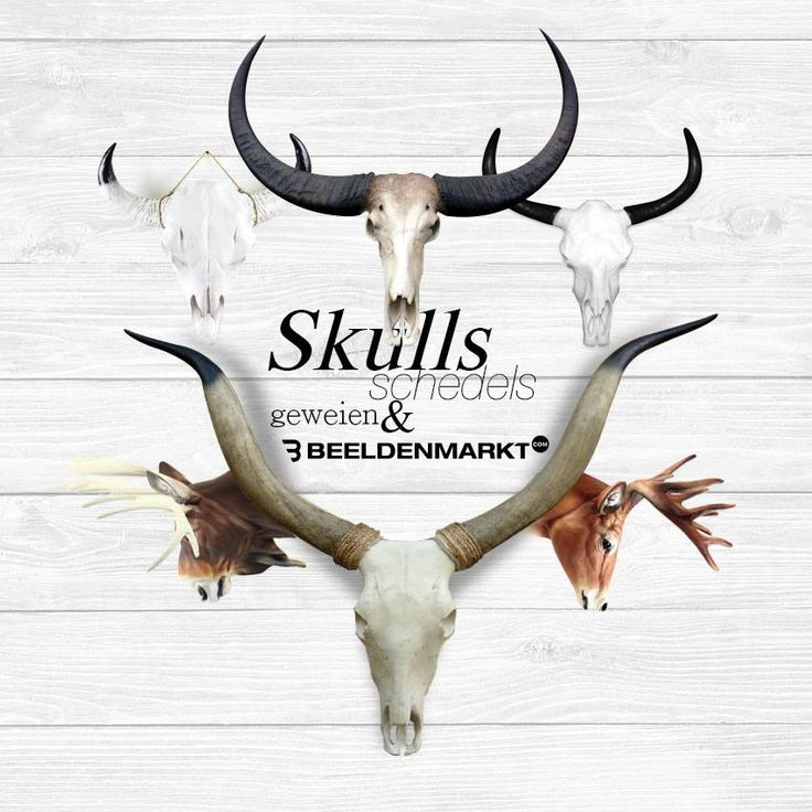 longhoorn schedel texas longhorn faux longhorn skull