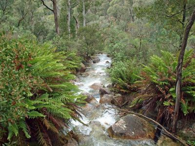 Parks Victoria - Mount Buffalo National Park ~ Eurobin Creek