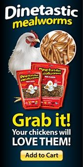 You and your chickens will enjoy the benefits of these naturally dried mealworms. We love tasty treats and so will your girls. Order yours today
