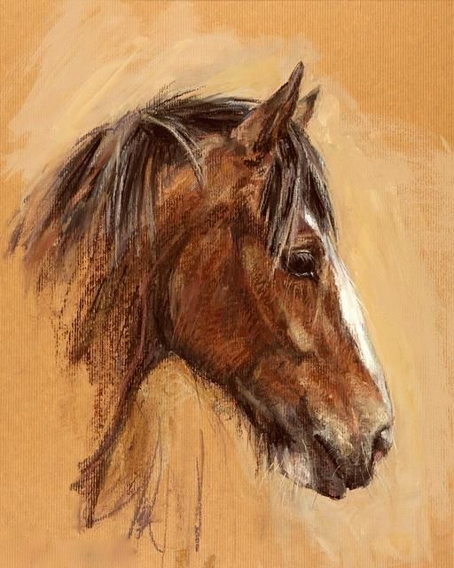 Cute fuzzy horse. I like this! Horse painting, drawing. Claire Verity
