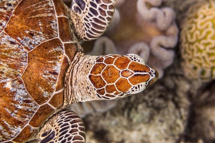 FLIPP Management | Jem Cresswell  #turtle #underwater #photography