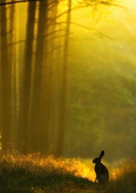 Still nature: Forests, Rabbit Hole, Ears Mornings, Peter O'Tool, The Silence, Peter Rabbit, Watership Down, Mornings Lighting, Bunnies