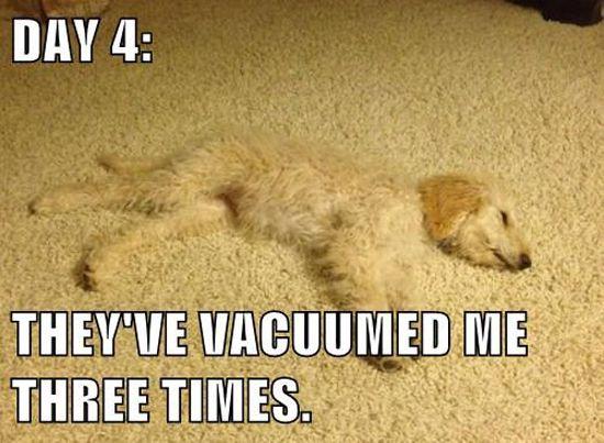 Funny Carpet 68 best carpet humor images on pinterest   carpet, carpets and animals
