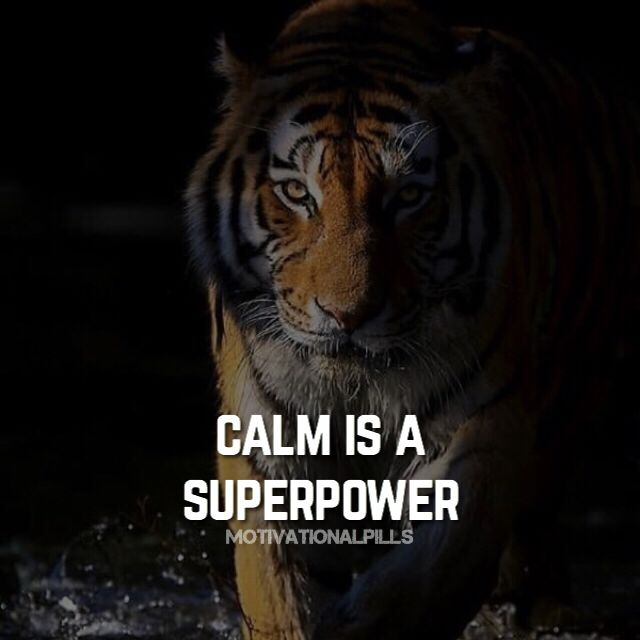 Quotes About Animals Tigers Quotesgram