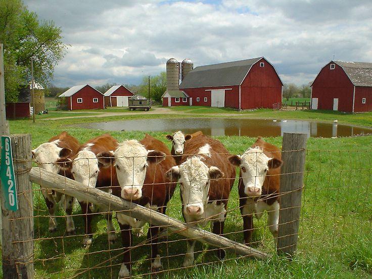 57 Best Idyllic Farm Images On Pinterest