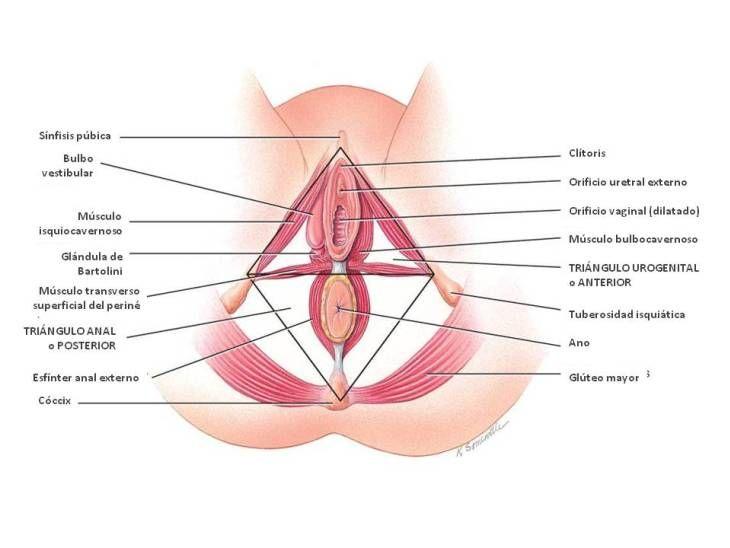 uretritis en mujeres merks manual gratis