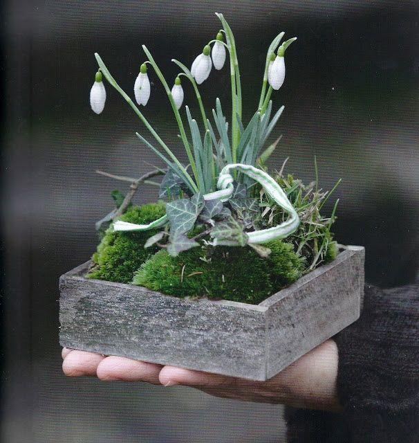 Snowdrops Moss Ivy Via La Pouyette Ivyvia La Moss Pouyette Spring Ivy Ivyvia Moss Pouyette Sn In 2020 Deko Fruhling Fruhling Blumen Gartenzwiebel
