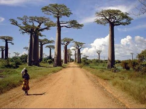 Wild Life in Madagascar Full Length Wild Life Documentaries