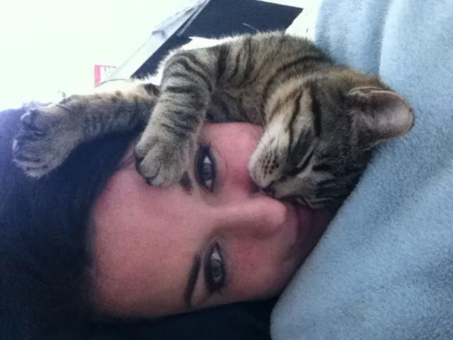 cats best friend