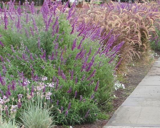 Drought Tolerant Garden Design Design, verticals