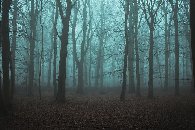 woods - photo henrik emtkjaer hansen