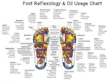 Where to place doTERRA oils on the reflexology points on the foot. Our feet are a map of our whole body system! When you apply the oils on the specific point it stimulates that area of the body and the oils go and do there job!!